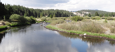 Fishing the Little Truckee River
