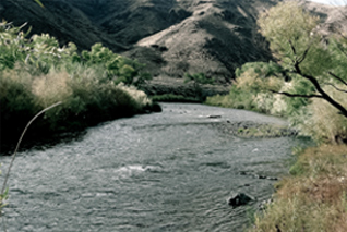 Trout Fishing Waters Northern Nevada