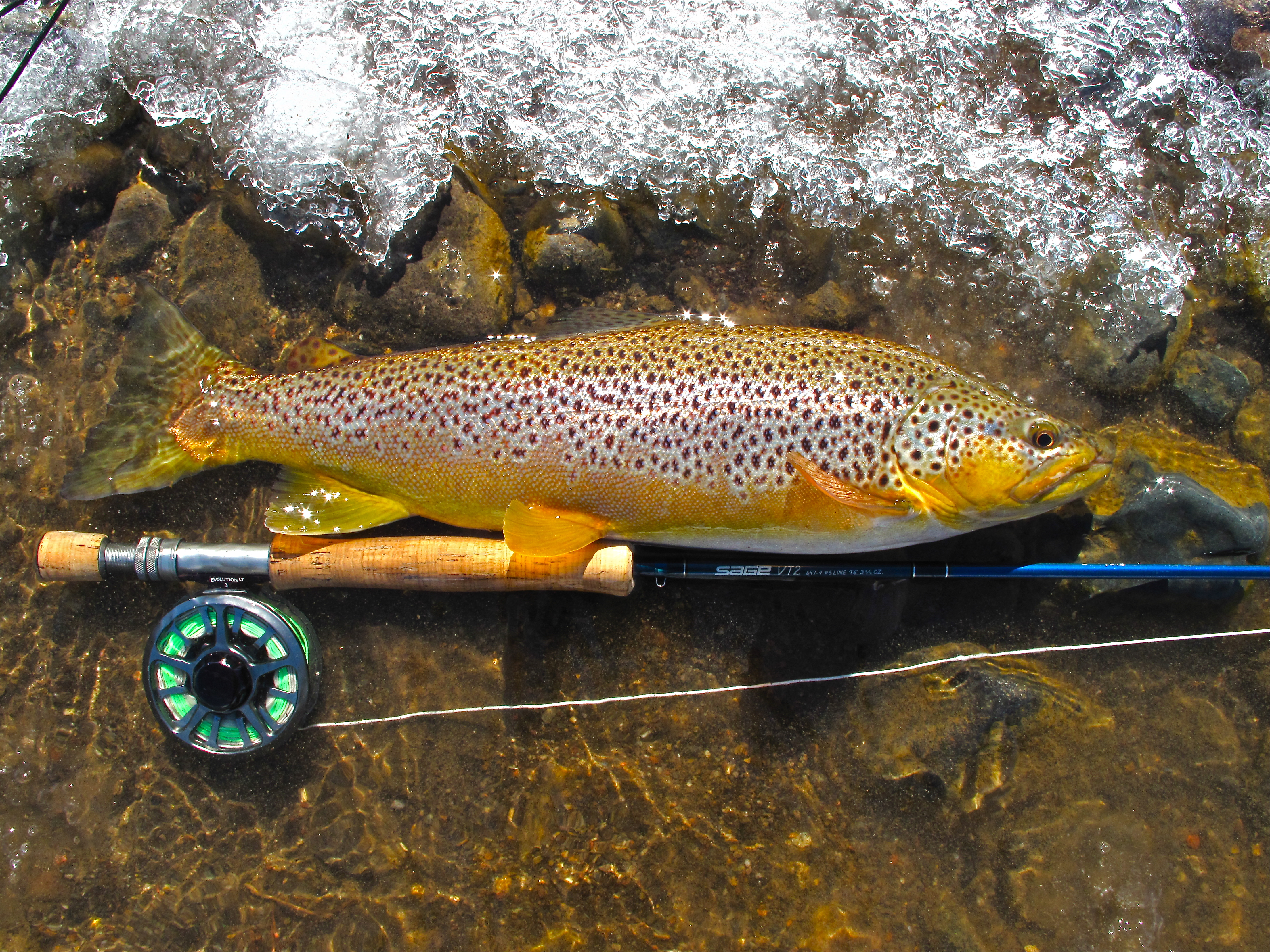 Fishing report january 21 2016 reno fly shop northern for Nevada game and fish