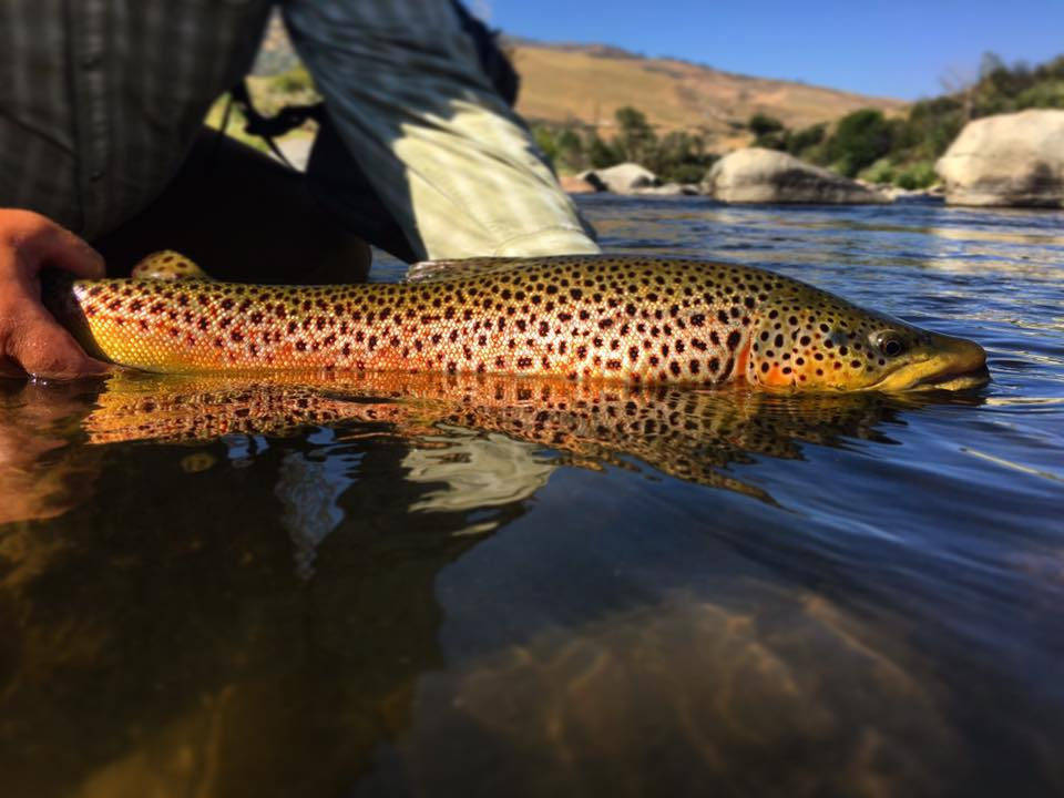 Mike Curtis' day off on the Truckee River. (photo Bailie Thys)