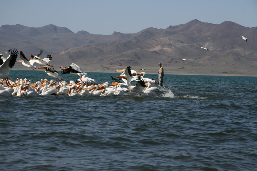Pyramid lake update 2 14 and re opening around march 1 for Pyramid lake fishing report