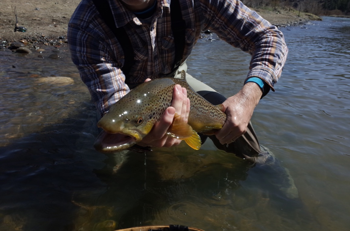 G2 reno fly shop northern nevada fly fishing outfitters for Fly fishing nevada