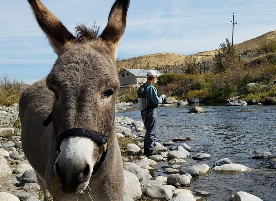 Mid october fly fishing report reno fly shop northern for Plenty of fish reno