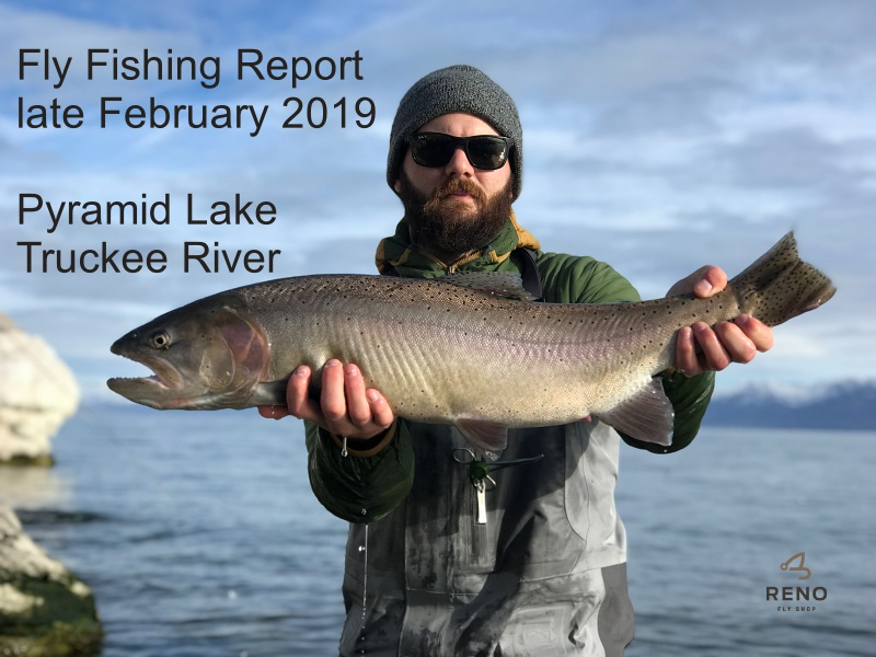 Reno Events Calendar February 2019 Fly Fishing Report | Pyramid Lake and the Truckee River |late